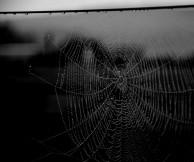 Spider web 4